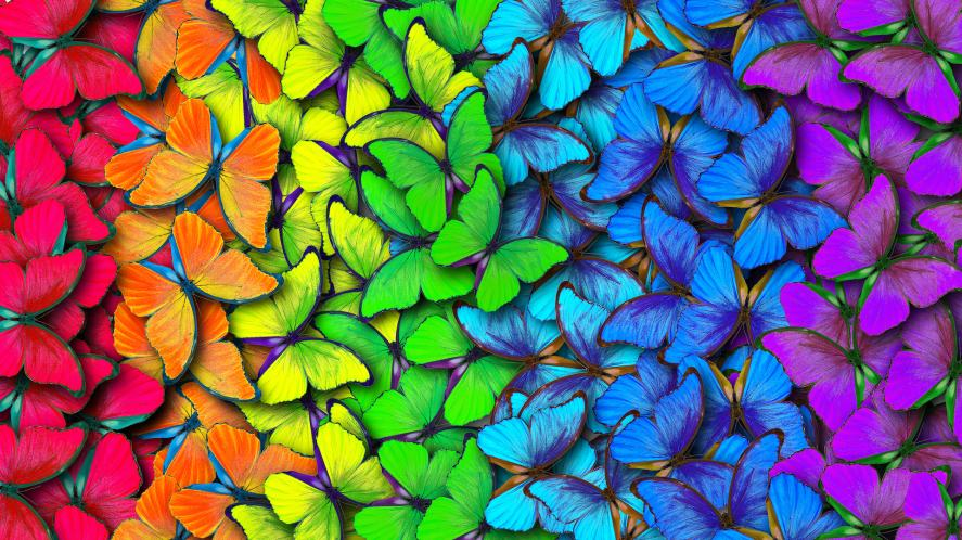 A crowd of colourful butterflies