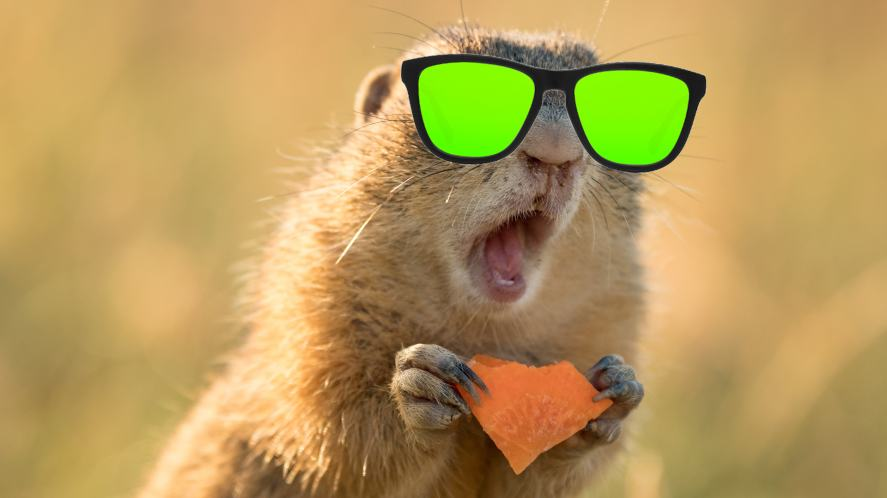 A surprised squirrel wearing sunglasses