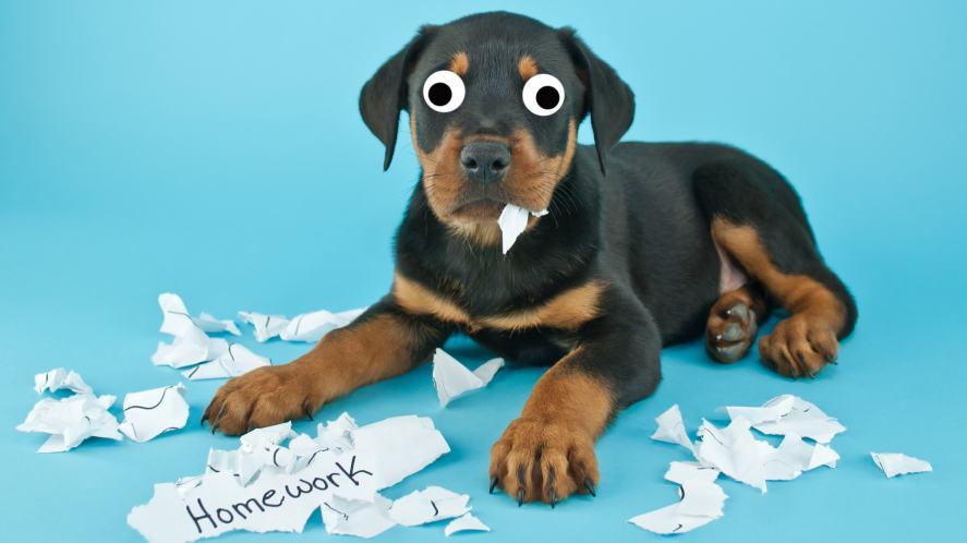 A dog whose eaten your homework!