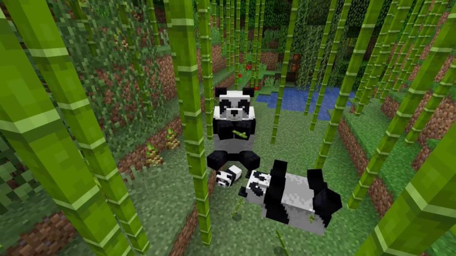 A group of pandas