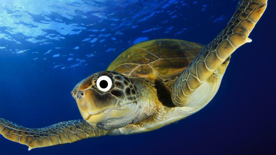 A fast sea turtle