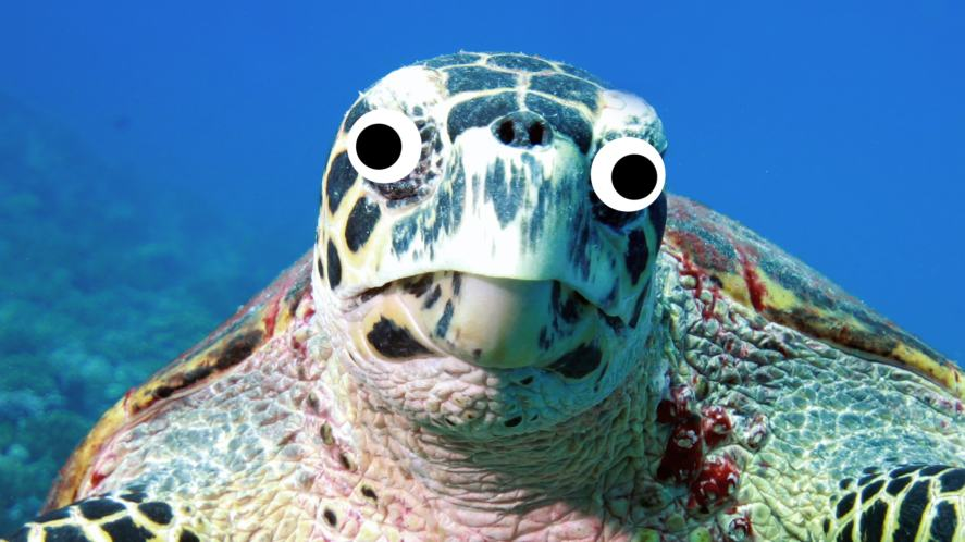 A close-up of a sea turtle
