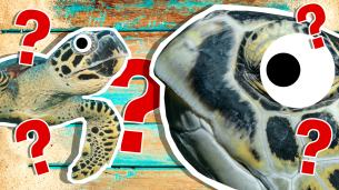 Turtle Personality Quiz