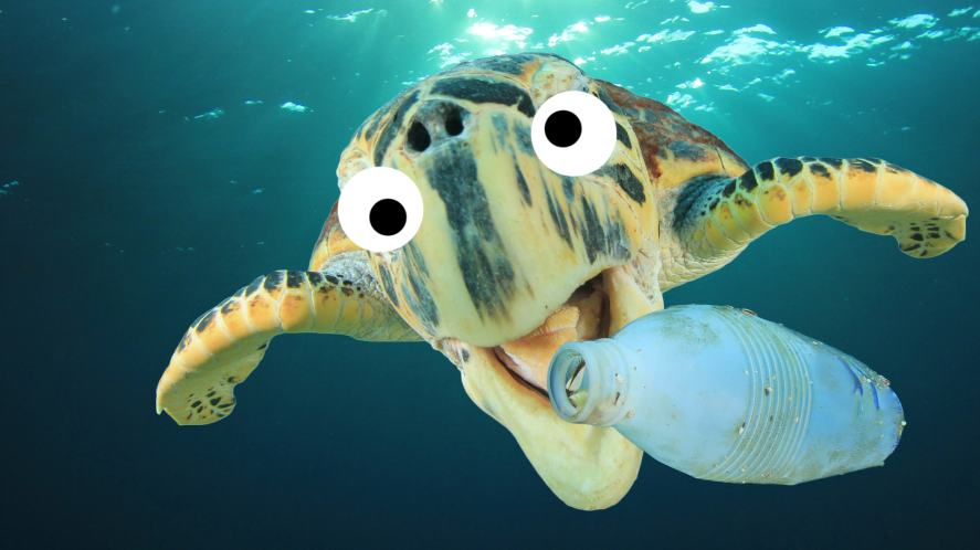 A turtle and a plastic bottle
