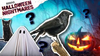 Max's Halloween Quiz