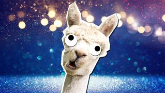 Llama Jokes