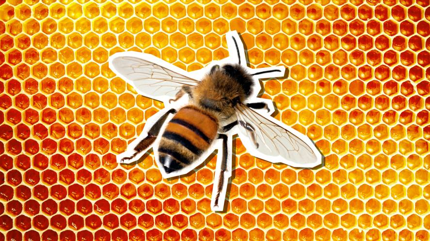 A bee on some honeycomb