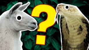 2019 Animal Quiz!