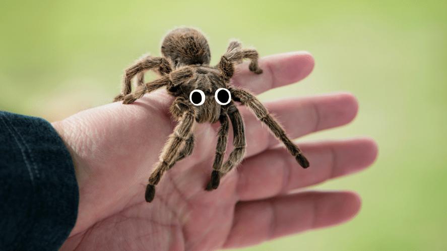 A tarantula on a person's hand