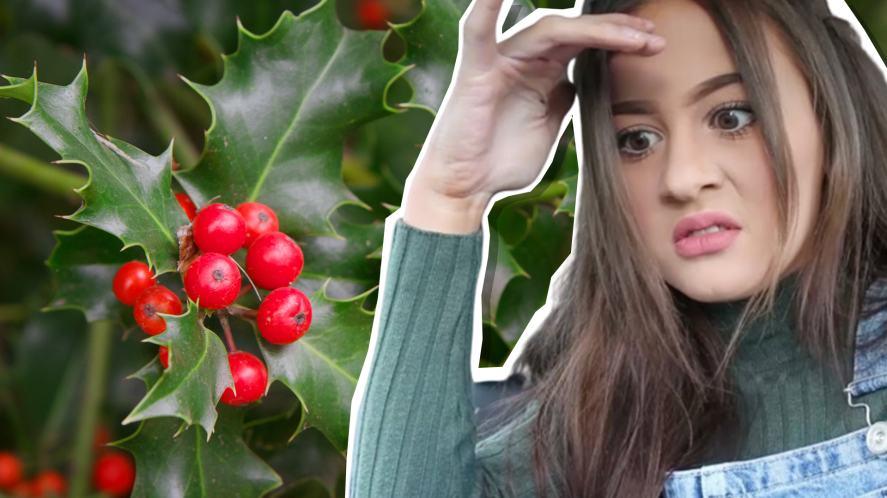 Holly H and a holly bush
