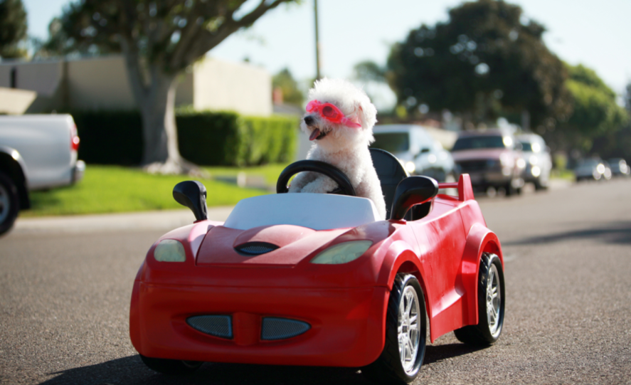 Dog in a car. It's very funny.