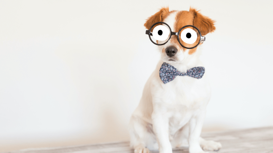 A fancy dog in a bowtie and glasses