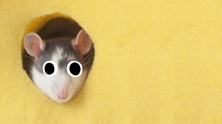 A mouse poking its head out of some cheese