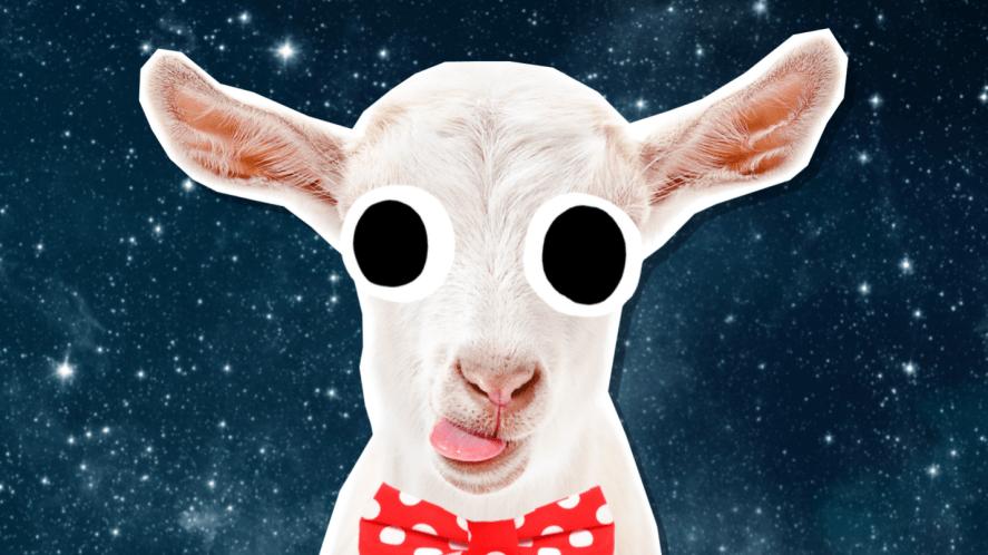 A goat wearing a bowtie