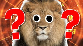 The Ultimate Leo Quiz