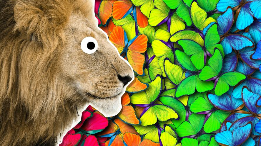 A lion looking at colourful butterflies