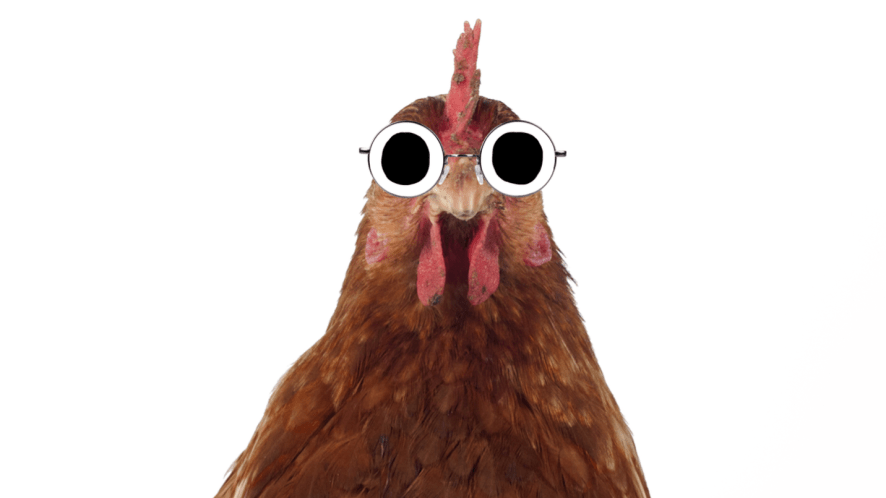 An old chicken wearing glasses