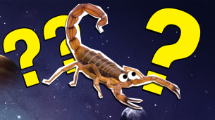 The Ultimate Scorpio Quiz