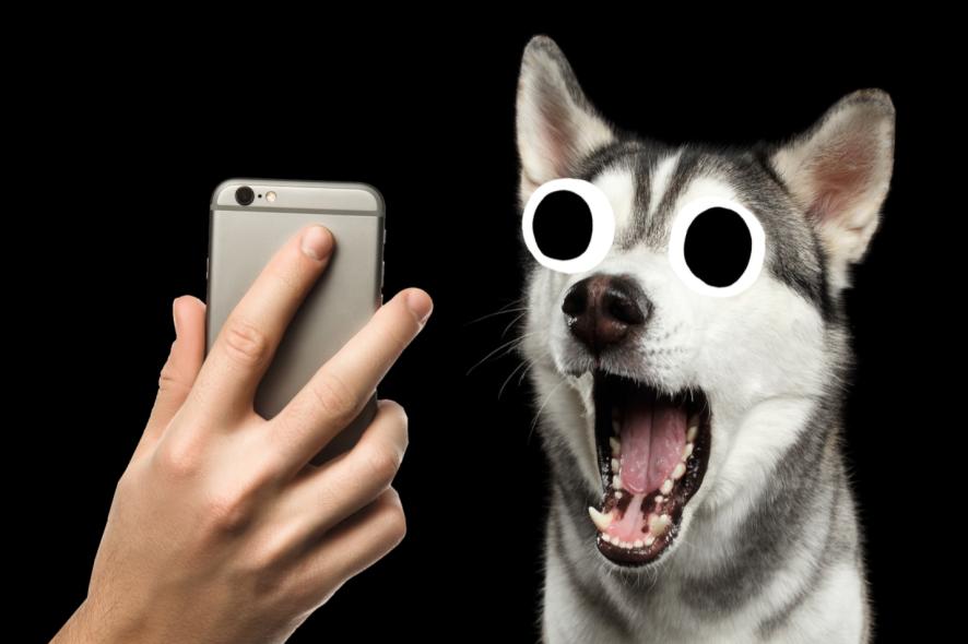 A dog reacting to a TikTok statistic