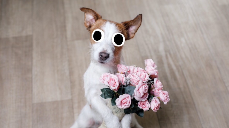 A pet dog holding a bunch of flowers