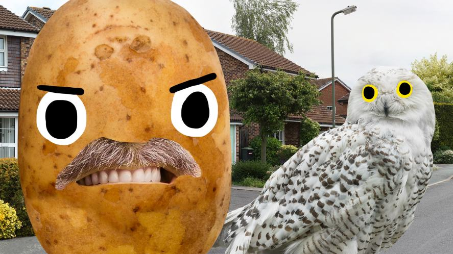 An owl and potato on a suburban street