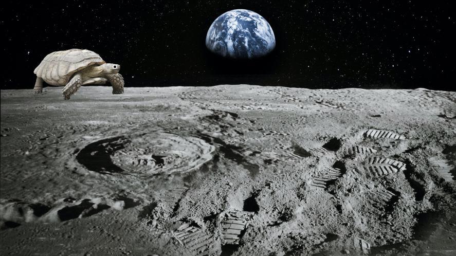 A tortoise on the moon