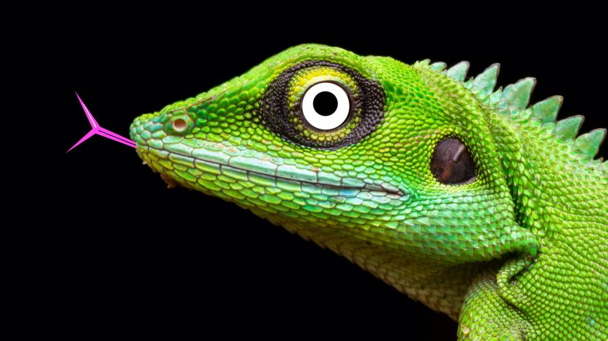 A green crested dragon
