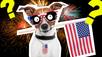 4th of July Dog with American flag