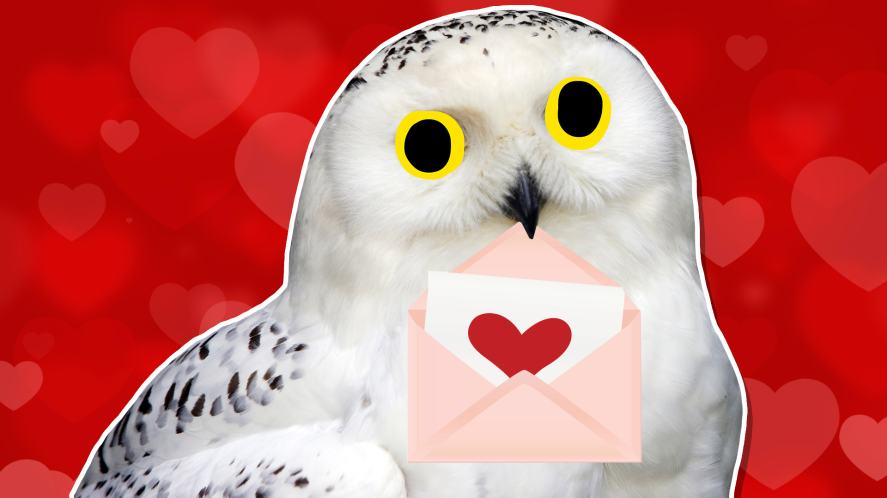 An owl with a Valentine's Day envelope