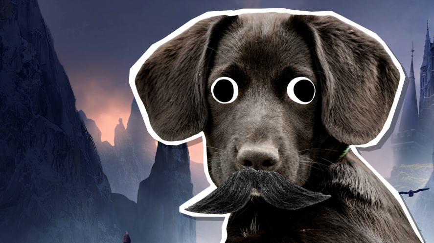 Sirius Black, but as a dog