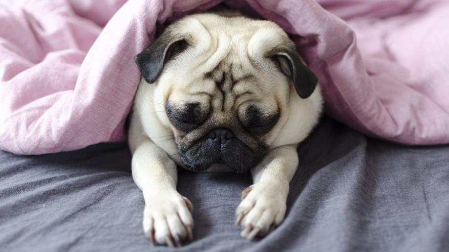 A sleepy dog