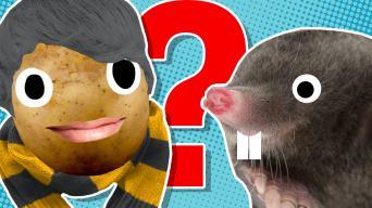 Fantastic Beasts personality quiz
