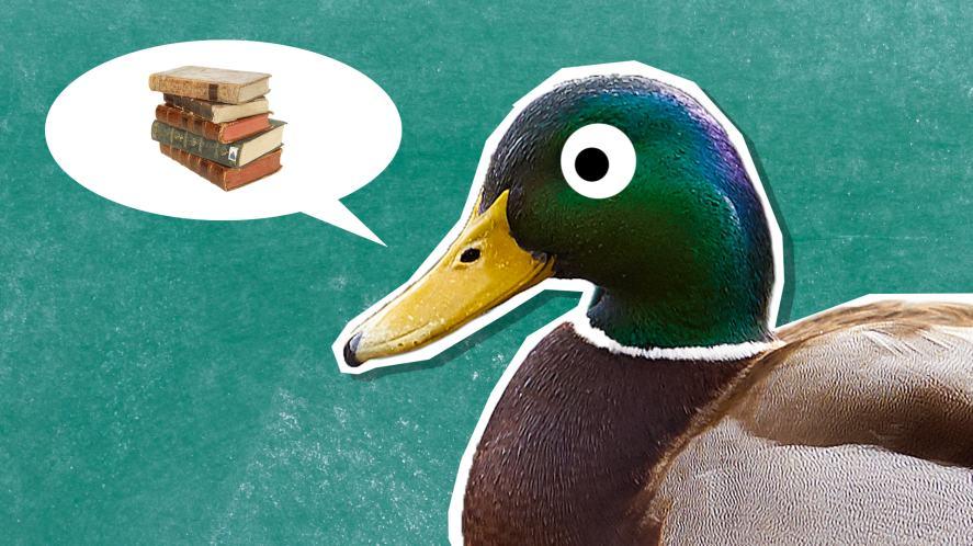 A duck teacher