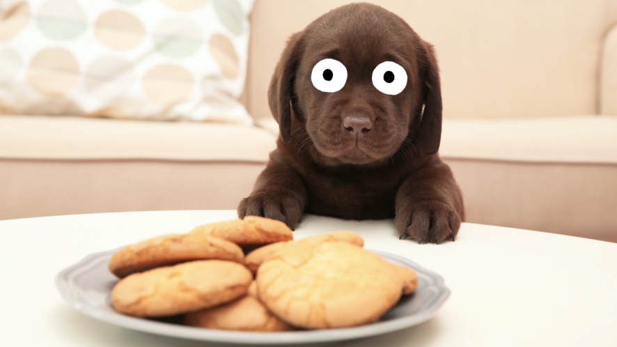 A puppy looks at a plate of biscuits