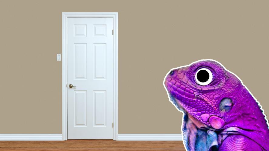 A chameleon next to a bedroom door