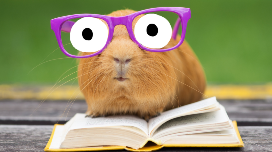 A guinea pig in glasses reading a book outdoors