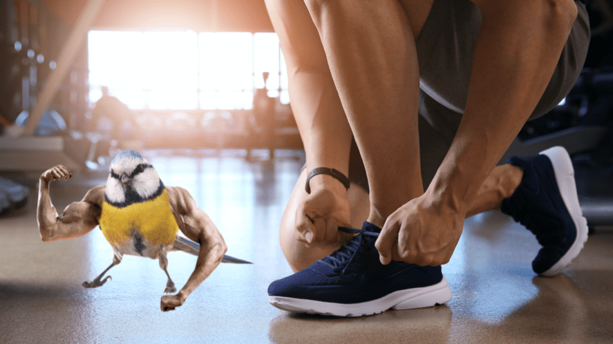 Sporty young man tying shoelaces in gym and a muscular bird