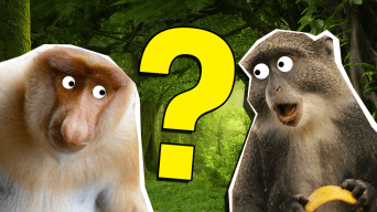The Ultimate Monkey Quiz