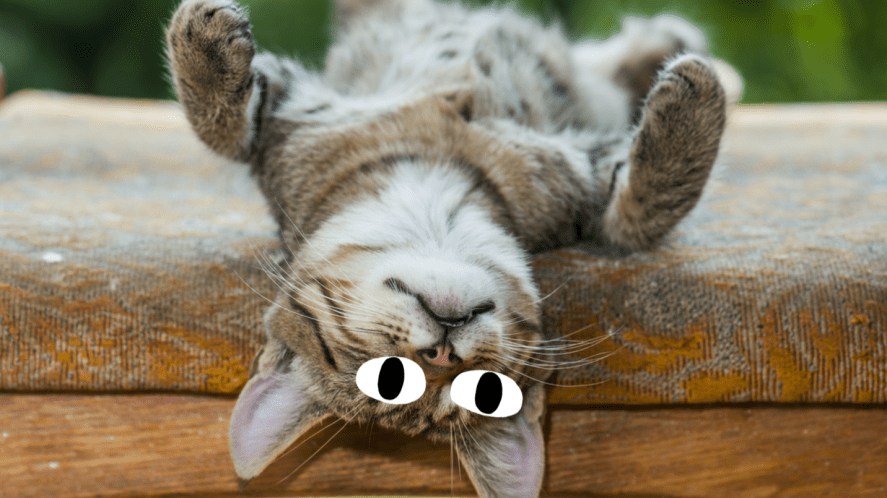A cat relaxing