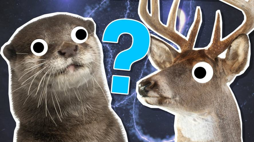 An otter and deer