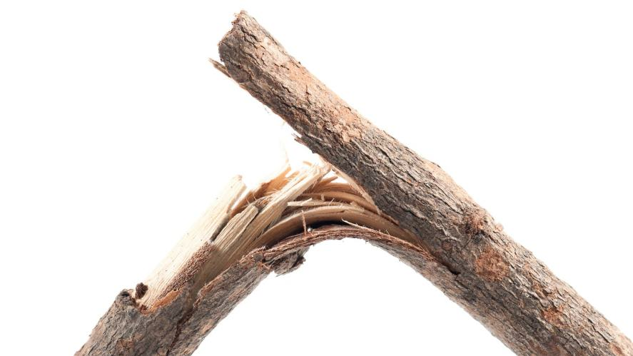 A snapped twig