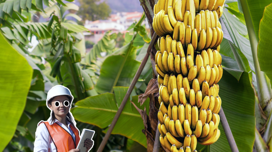 A woman next to a tall banana plant