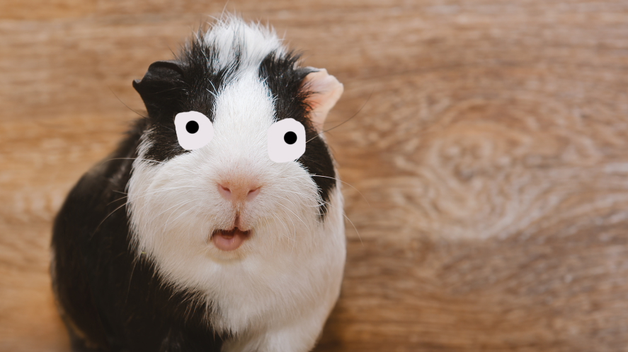 A Guinea Pig On A Wood Background