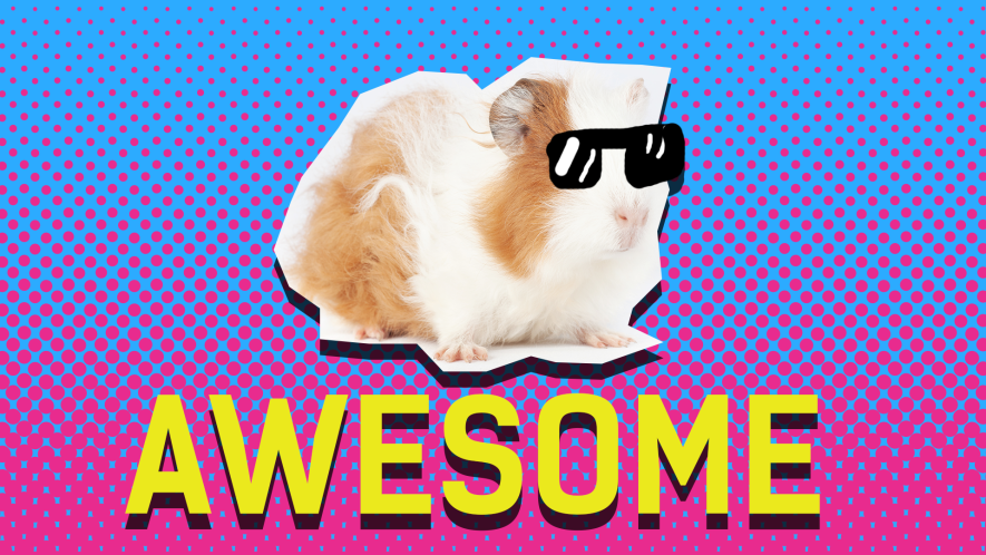 Guinea Pig and the word awesome on blue and pink background