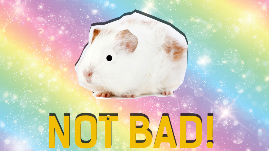 White Guinea Pig and the word awesome on a rainbow background