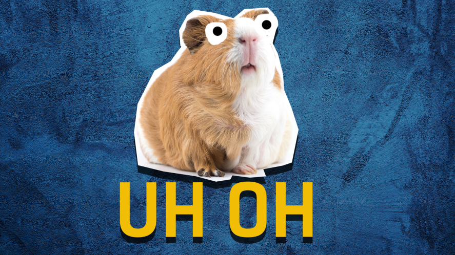 Guinea pig on a blue background with the words uh oh
