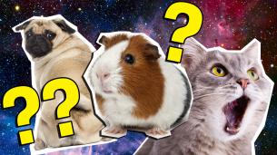 The Ultimate Pet quiz