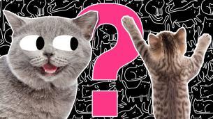 Ultimate cat quiz