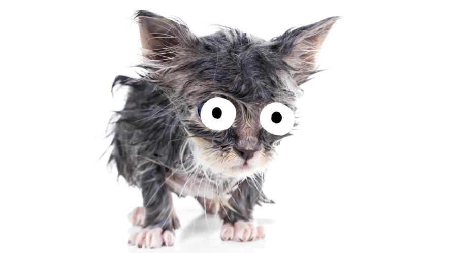 A sweaty cat