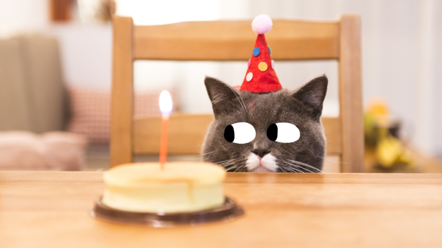 A cat with a birthday cake